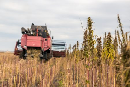 Our Hemp Stock Prediction in 2019 (Buy or Sell?) - Investing