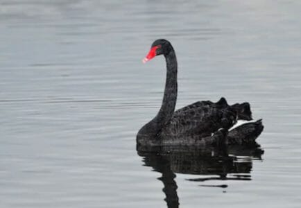 Bracing for the Next Black Swan